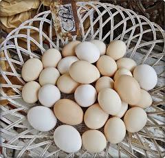 Fina ägg