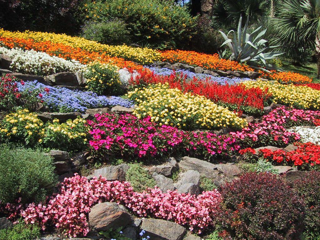 Cosas de sofia poema de una principiante jardinero for Jardines pequenos y bellos