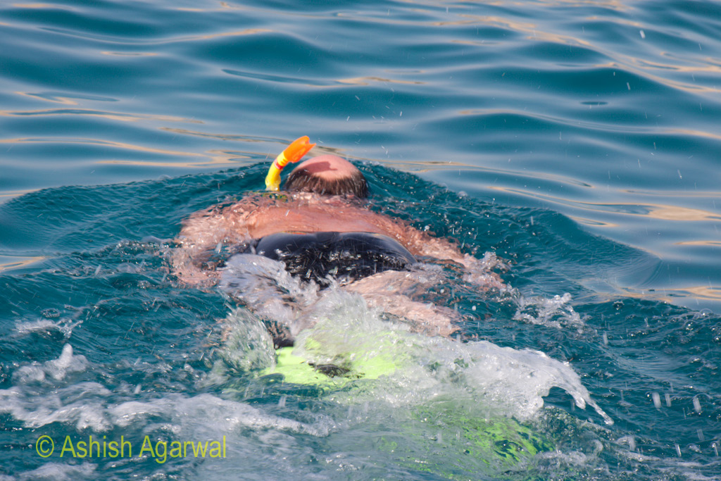 Snorkeling man propeling himself forward in the water of the Red Sea