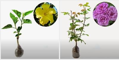 usaha jual bibit tanaman
