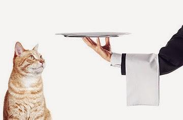Plano saúde animal cães gatos