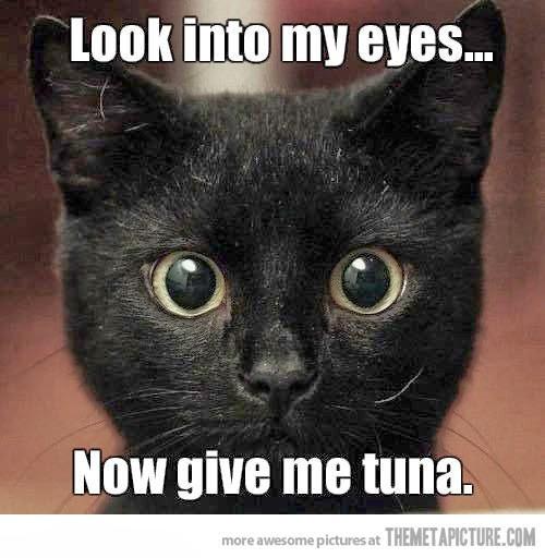 rahasia dibalik hipnotis kucing, cara menghipnotis kucing