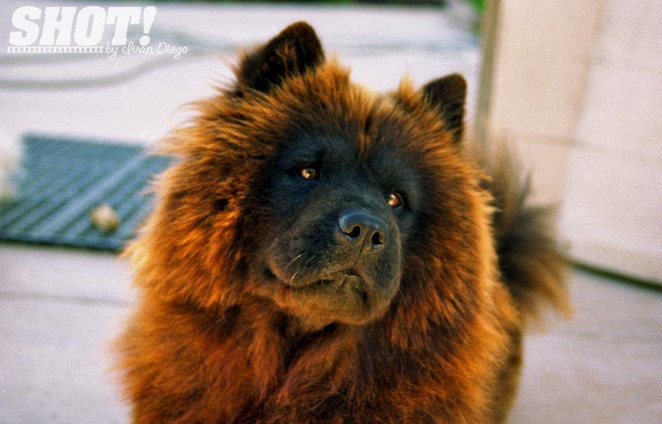 Really Big Fluffy Dog Breeds Big fluffy dogs cake ideas and