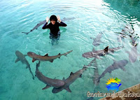 wahana hiu karimunjawa