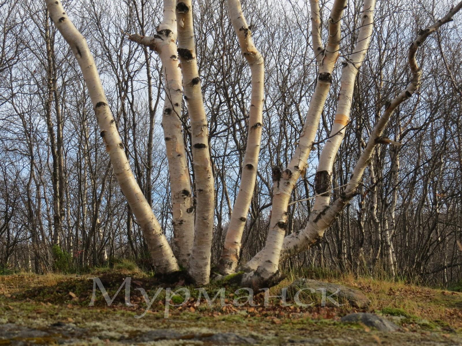 Прогулка голым весной 13 фотография