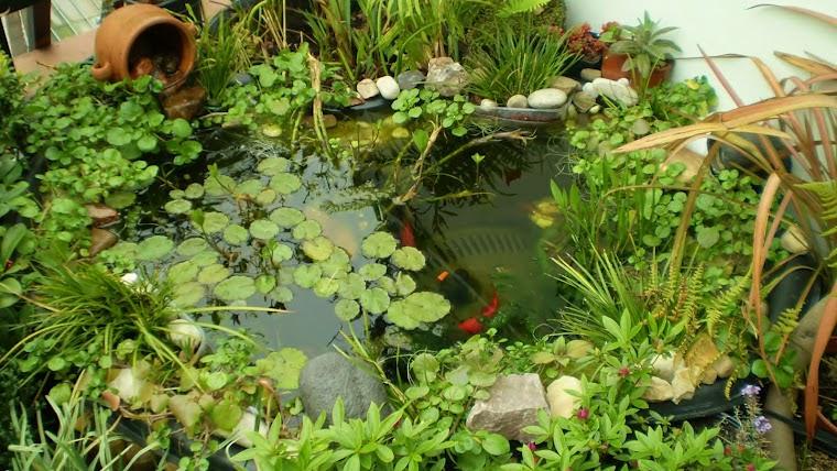 Tecnoecologia utilizando plantas y microbios para limpiar for Peces para limpiar estanques