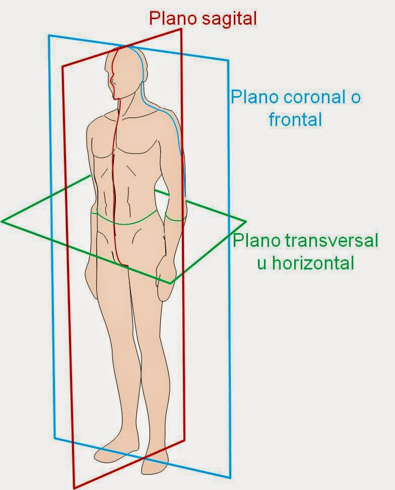 Morfofisiologia l: Terminos anatomicos
