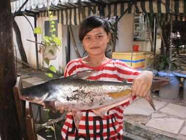 cá 5kg dưới hồ