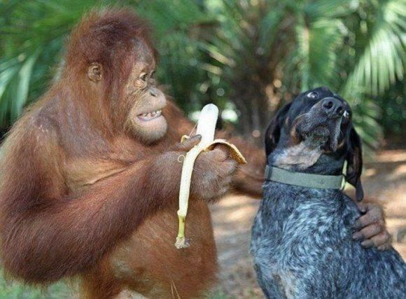 gambar-monyet-lucu