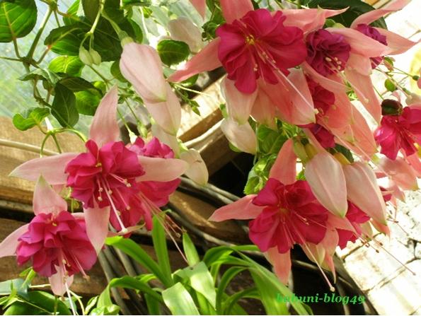 Moje kwiaty tańczą walca