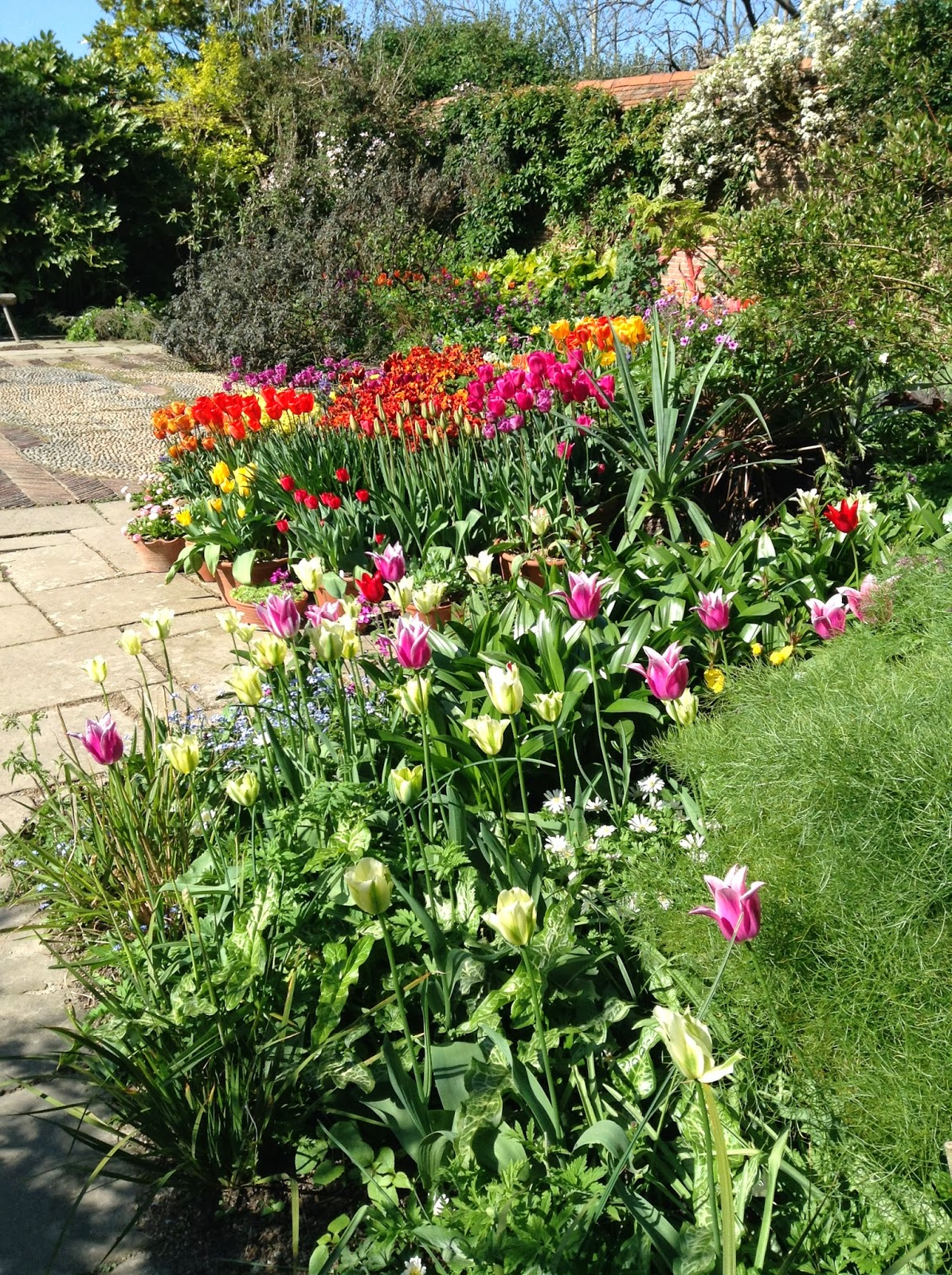 Great Dixter Wall Garden Tulip Pots Display - Photo by Noemi Mercurelli