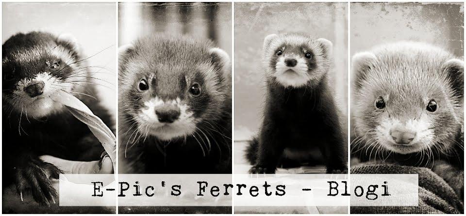 E-Pic's Ferrets - Blogi