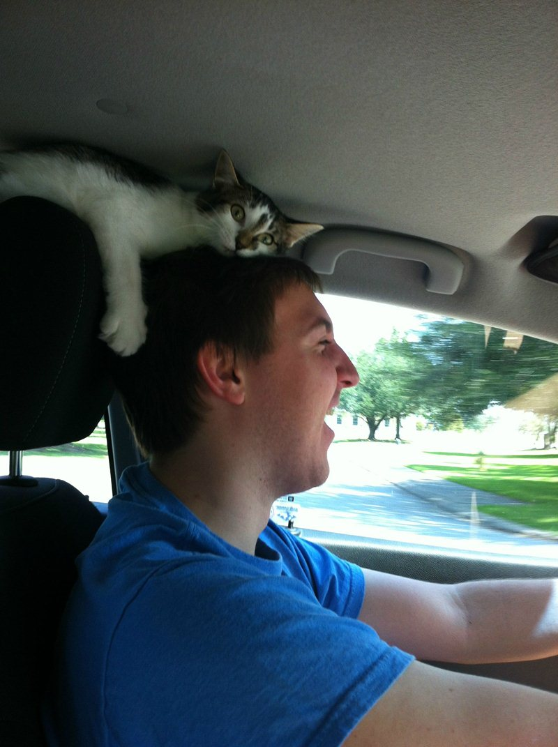funny cat pictures, cat riding car