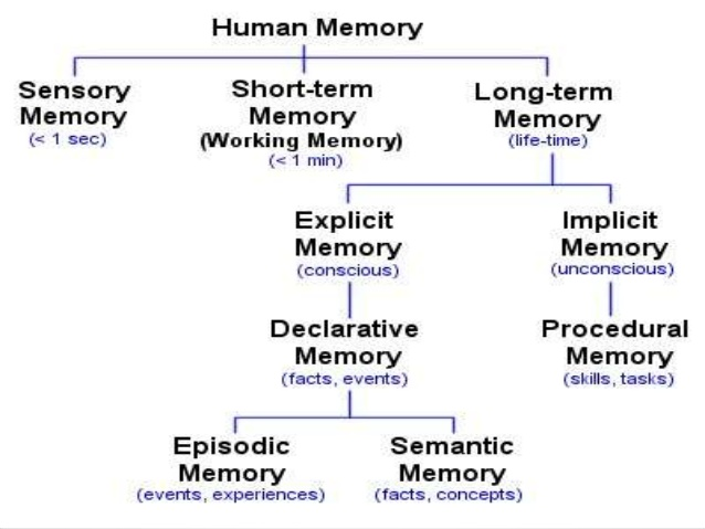 the psychological phenomenon of flashbulb memory This chapter discusses these different types of memory and further gives an insight into memory phenomena like false memory and forgetting finally, we will consider biological foundations that concern memory in human beings and the biological changes that occur when learning takes place and information is stored.