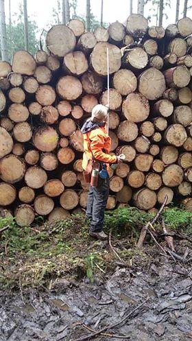 Praktikum im Forst