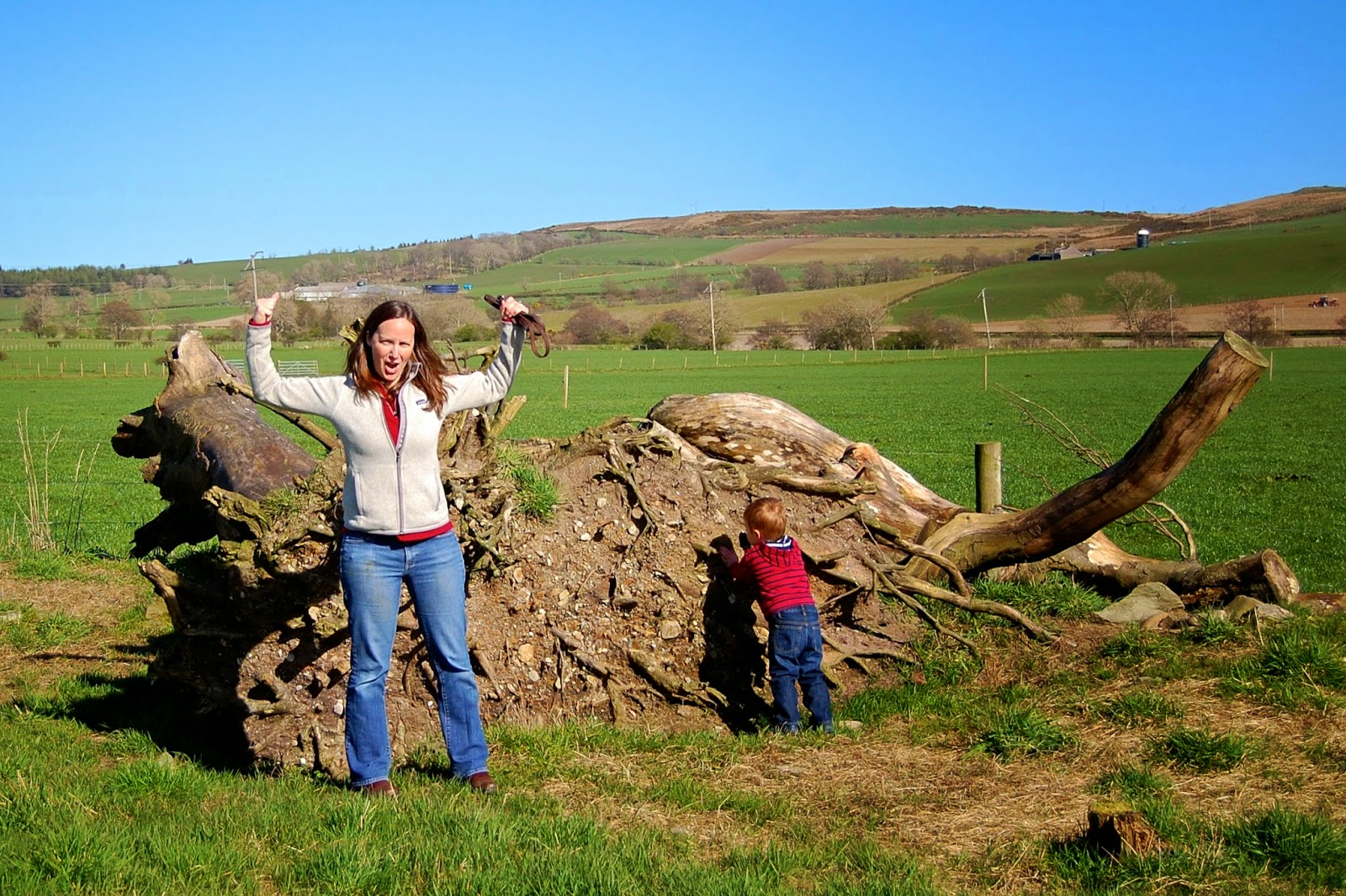 Topple tree in the St. Colmac cottages stone circle