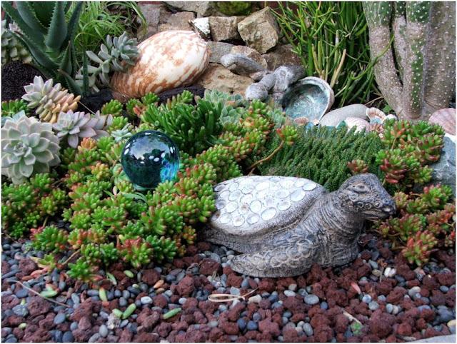 Liven Things Up Nadias Ocean themed succulent garden