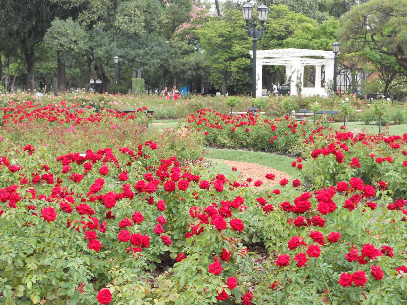 jardim rosas buenos aires : Datoonz.com = Jardim De Rosas De Buenos Aires ~ V?rias ...