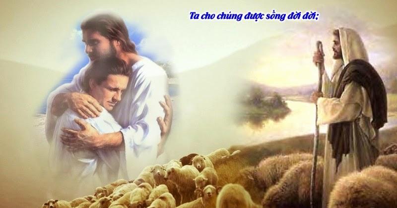Giảng lễ Chúa Nhật Chúa Chiên Lành
