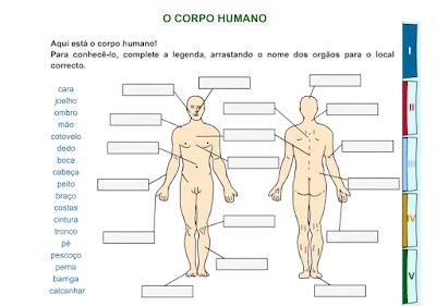 http://websmed.portoalegre.rs.gov.br/escolas/obino/cruzadas1/corpo/1136_corpohumano.swf