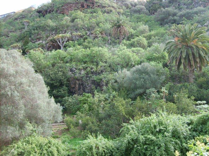 Especies amenazadas de canarias febrero 2012 for El jardin canario
