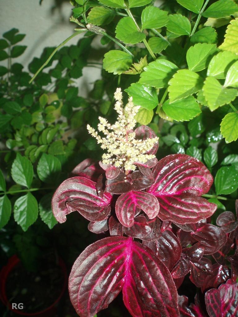 Verde y tierra las hojas ornamentales for Hojas ornamentales