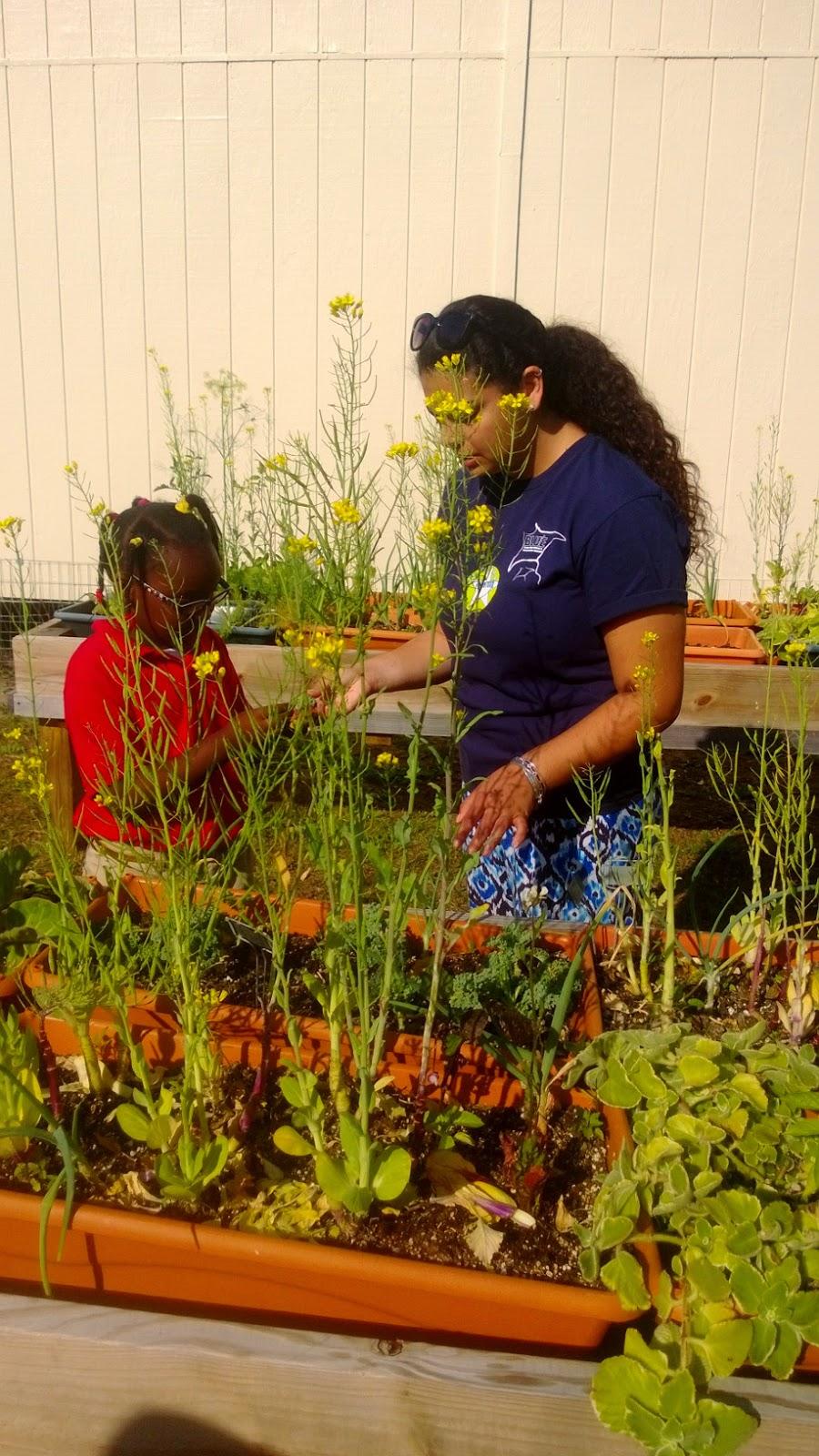 Melrose Peace Patch Garden
