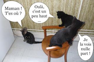 Trois chatons noirs et tabby, en escalade sur une chaise.