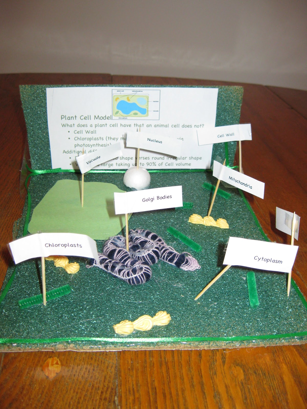 3d Plant Cell Models Plant cell model