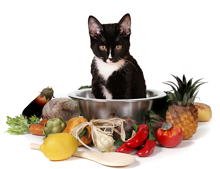 cat, Cat Food Ingredients, Cats, pet, pets,