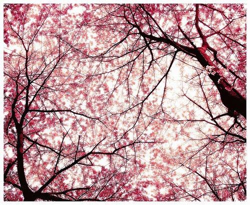 Ciudadano Noodles: Cerezos en Flor y Dolls de Takeshi Kitano ...