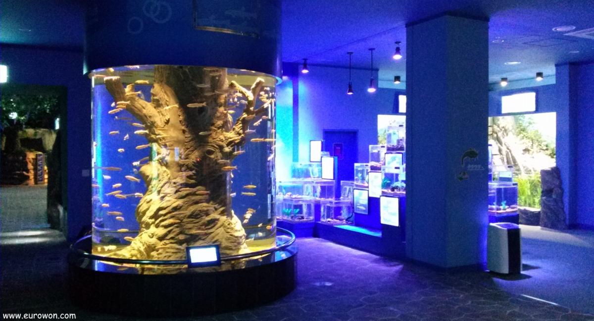 Acuario de peces de agua dulce de Danyang