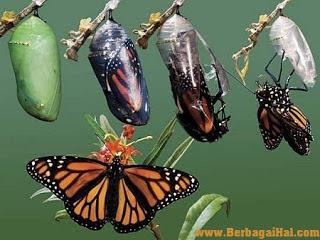 contoh hewan metamorfosis