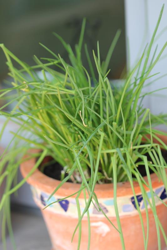 Pflanzen selber säen