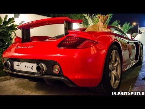 فيديو: شبل صغير على محرك بورش كاريرا GT قطر
