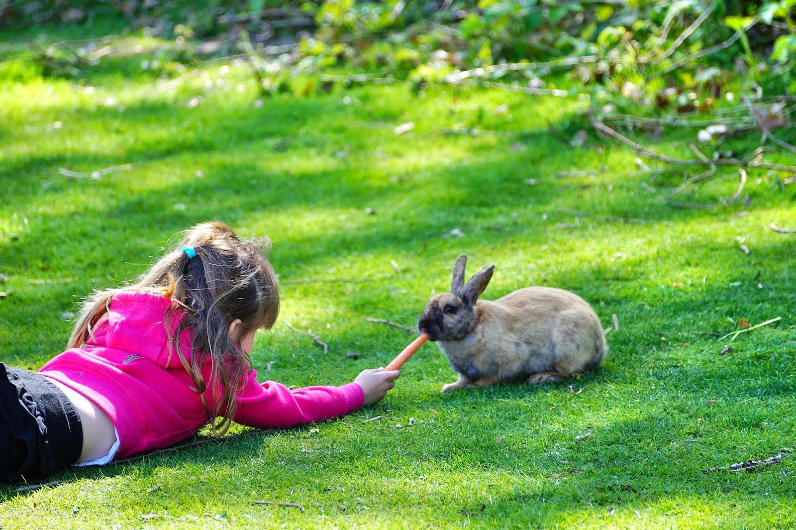 Дети в восторге от того, что могут покормить кроликов, свободно гуляющих на воле.