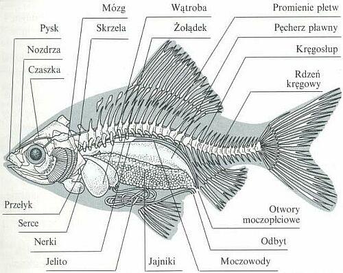 ksi u0119ga  u015awiata  ryby