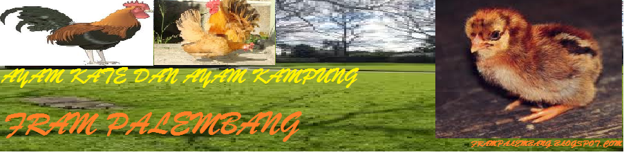 Peternakan Ayam Kampung Dan Kate