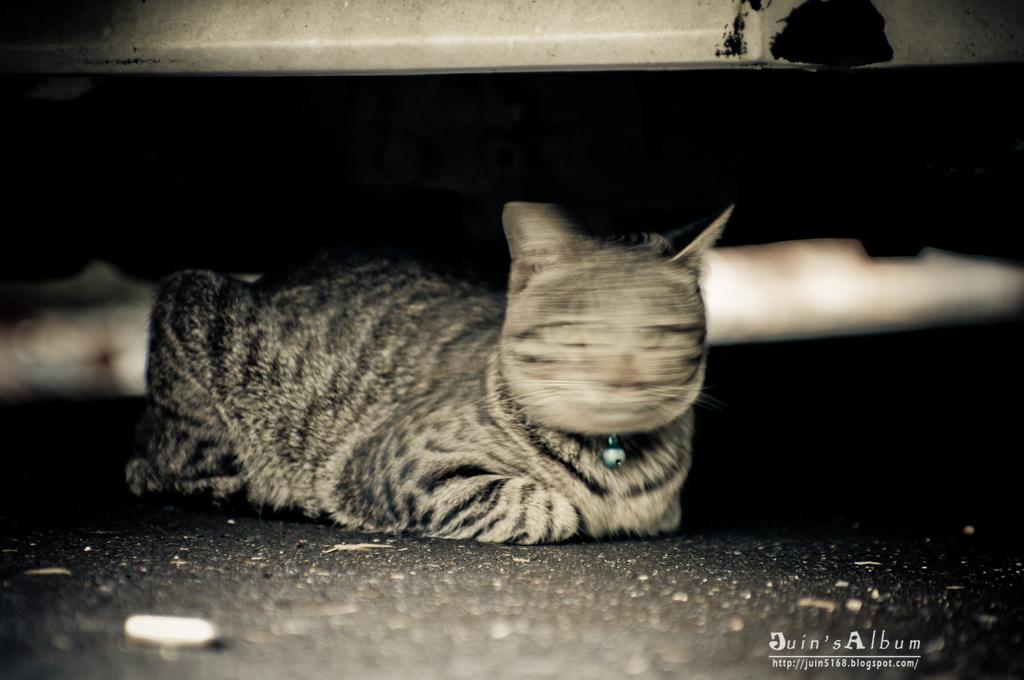 高雄街貓隨拍
