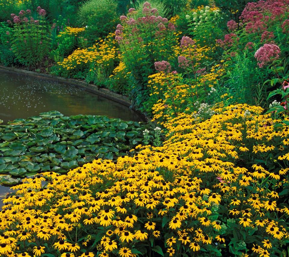 flowers for flower lovers.: flowers sceneries desktop wallpapers.