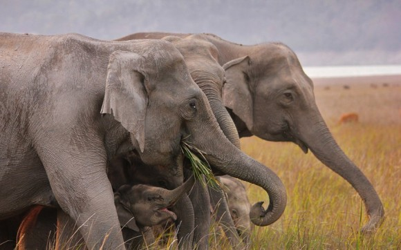 لأجمل اللحظات عالم الحيوان potd_elephant_220369