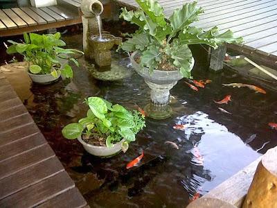 tips desain kolam ikan mungil rumah minimalis (foto