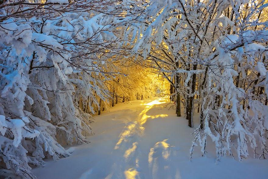 Musim Dingin Sunrise di Jalur Dalam Campigna National Park, Italia