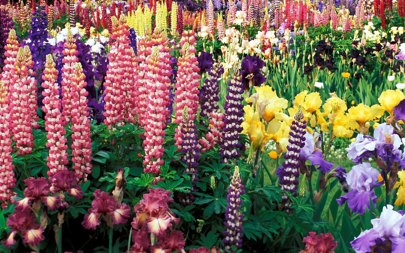 Bloemen achtergrond met gekleurde bloemen hd bloem wallpaper