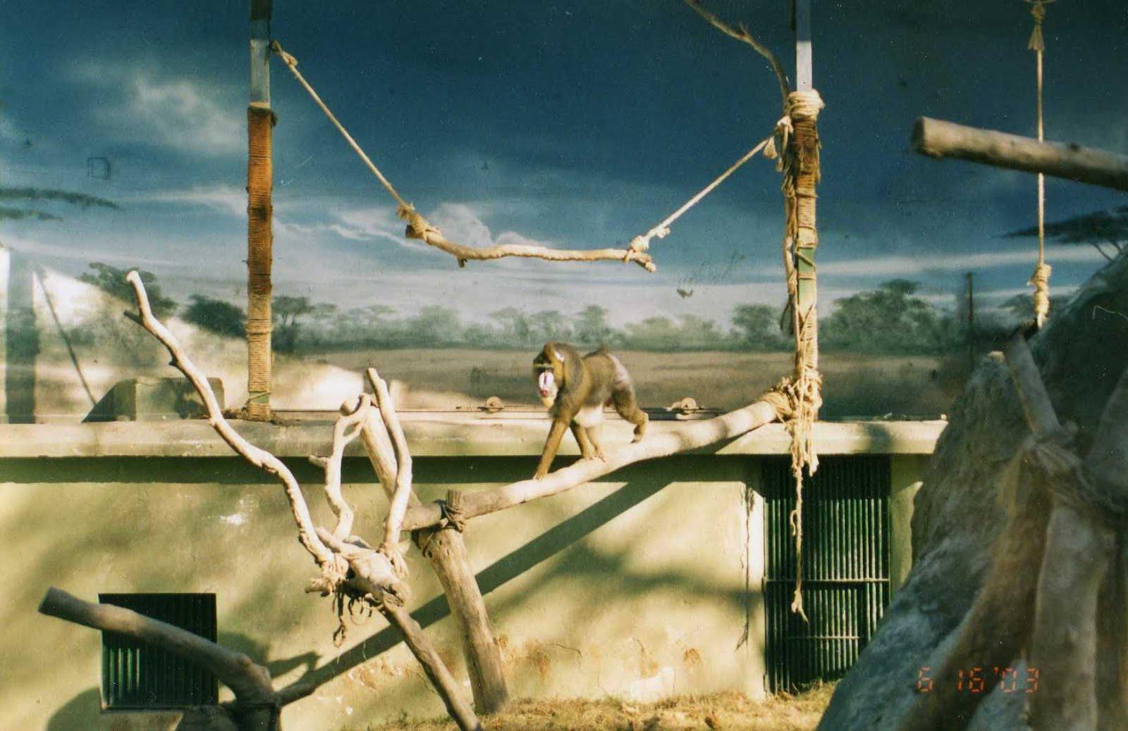 Se permiten Monos