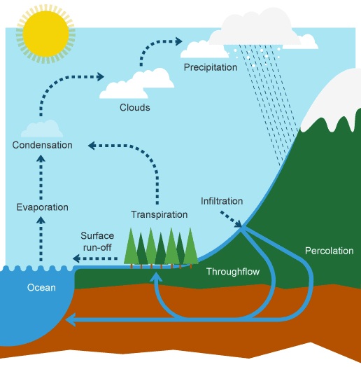 Transpiration Water Cycle Water Cycle Credit Bbc