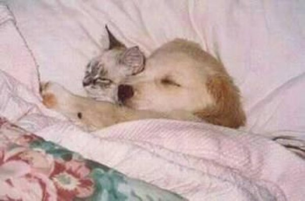 Puppy And Kitten Sleeping HD Animals: dogs and c...