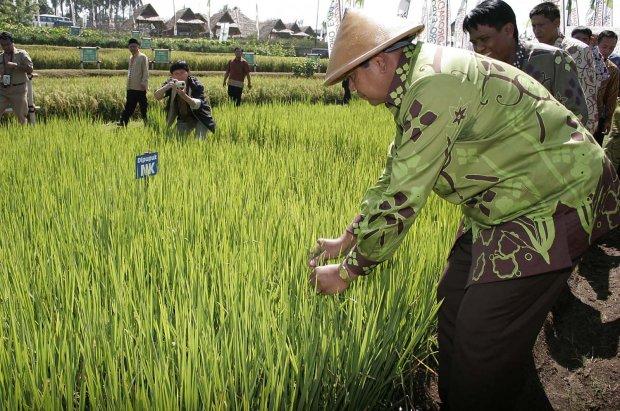Tiga petani dari Kabupaten Kubu Raya yang mewakili Kalimantan Barat terpilih menjadi petani terbaik di tingkat nasional