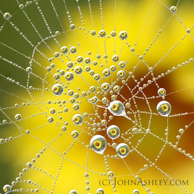 'Sunflower Galaxy' (c) John Ashley