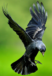 the jackdaw's merry jig